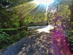 Summer Sun brightening up the morning walk up the Driveway of the Old Deanery Holiday Cottages Cow House, Duck House, Summer Sun, Cottages, Old Things, Country Roads, Trees, Seasons, Gallery
