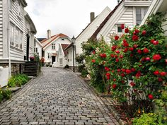 Stavanger Old Town Norway Stavanger Norway, Norway Oslo, Most Beautiful Pictures, Beautiful Places, Norway Fjords, Beautiful Norway, Visit Norway, Photography Tips For Beginners, Countries Of The World
