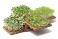 Minis terrasses