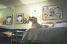 It's no secret at Thompson Hotels that we're pet friendly and love all animals, but no dog has ever captured our eye more than Wrigley who stayed with us at Thompson Chicago last week. Take a look at his New Year's Eve Stay-cation at the hotel, documented by the lovely blog Drunk on Shoes.