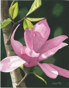 Faerie Song Available Magnolias, Amazing Flowers, Watercolours, Faeries, My Favorite Things, Floral, Artist, Plants, Painting