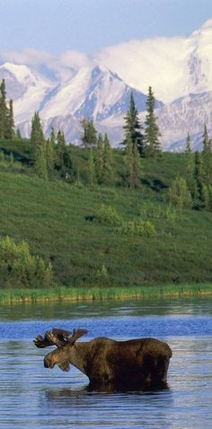 Denali National Park & Preserve, Alaska | 27 Underrated U.S. Vacation Spots You Should Visit Before You Die