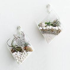 Mkono-2-Pack-Wall-Hanging-Plant-Terrarium-Glass-Planter-for-Home-Decor-Diamond-Shape
