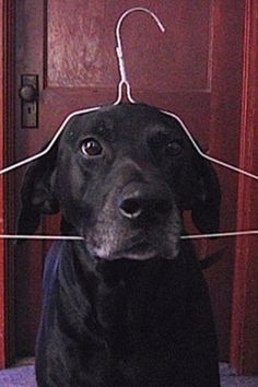 Hello dog - ''How's it hanging ? ''