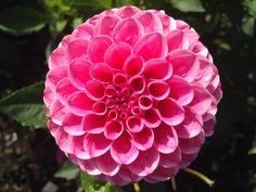Rebecca Lynn | New Day Garden