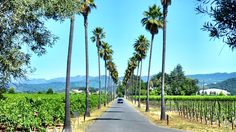 Not Your Standard Napa Tour – Mastering the Art of Oil and Vinegar Tasting