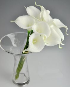 Free shipping, $0.56/Piece:buy wholesale Latex Callas 100pcs 35cm Elegant Silicon Artificial Egyptian Calla Lily Alocasia Plumbea Flower for Wedding Bridal centerpieces Decorations from DHgate.com,get worldwide delivery and buyer protection service.