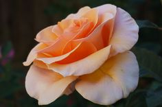 Explore Rose-Beauty's photos on Flickr. Rose-Beauty has uploaded 440 photos to Flickr.