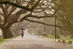 """""""Walking in the Rain"""". This foto FUE Tomada en Taiping Lake Garden, Perak, Malasia. Taiping es Conocida Como """"Raining Town"""", ya Que recibe l . National Geographic Photo Contest, National Geographic Travel, Lake Garden, Taiping, Walking In The Rain, Summer Rain, Paradise On Earth, Travel Magazines, Famous Places"""