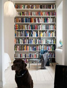 Chocolate Labrador in a library - who would have thought? Cool Bookshelves, Book Shelves, Inside Outside, Animal Books, Scandinavian Modern, Wabi Sabi, I Love Dogs, Pet Dogs, Dog Lovers