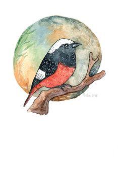 Redstart watercolor by Anastasy Siilin