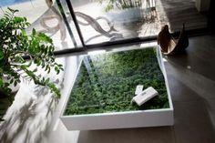 Mesa de centro com plantas reais