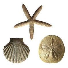 Sea Shells Christmas Ornaments Set of 3 | Jet.com