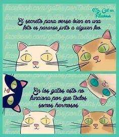 A los gatos...