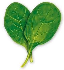 Buy the best bulk wholesale discount Raw Organic Spinach Powder on sale now & save money! Organic Spinach powder is a concentrated green food. Dehydrated organic spinach powder is 10 times more concentrated than fresh spinach. Organic Spinach powder is an Best Salad Recipes, Raw Food Recipes, Healthy Recipes, Dip Recipes, Food Tips, Healthy Tips, Pizza Recipes, Diet Tips, Veggie Recipes