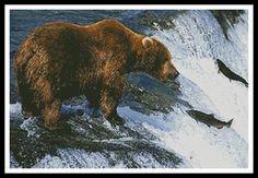 Grizzly Bear Salmon Fishing Cross Stitch Pattern