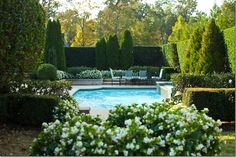 Lovely hedges + arborvitae enclose the pool giving the sense of privacy at Amy Howard's Memphis home.