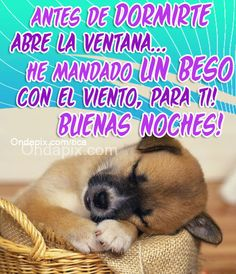 antes de dormirte #saludos #buenas noches #animales