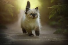 mel-cat:  First steps  ( via Anne Geier )
