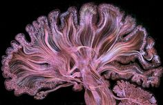 visualization of brain scans feat