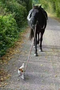 Friends come in all shapes and sizes. <3 #dog #horse