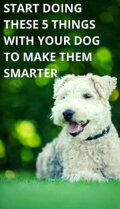 5 Tips for a Smarter Dog Leash Training, Crate Training, Dog Training Tips, Positive Dog Training, Shih Poo, Dog Memes, Dog Owners, You Can Do, Puppies