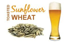 Sunflower Wheat
