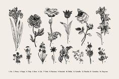 Botany. Card and set. Illustration. - Illustrations