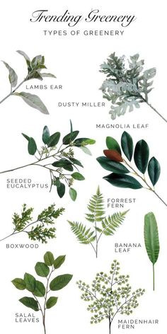 A Guide to Trending Greenery. Types of greenery that are trending for weddings a.- A Guide to Trending Greenery. Types of greenery that are trending for weddings a… A Guide to Trending Greenery. Types of greenery that are… - Deco Floral, Arte Floral, Floral Wedding, Wedding Bouquets, Wedding Greenery, Flowers For Weddings, Fake Wedding Flowers, Greenery Decor, Boquette Wedding