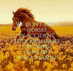 We don't meet horses by accident. They are meant to cross our path for a reason - We don't meet horses by accident. They are meant to cross our path for a reason Calm Self confidence Funny Horse Memes, Funny Horses, Cute Horses, Pretty Horses, Beautiful Horses, Equine Quotes, Equestrian Quotes, Equestrian Problems, Barrel Racing Quotes