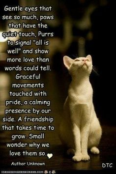 Small wonder why we love them so. Cats