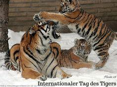 Heute ist: Internationaler Tag des Tigers