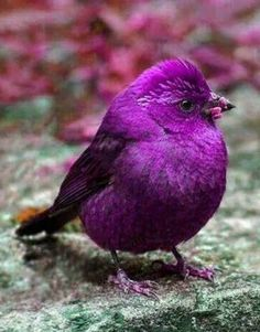 images of beautiful birds with their names Most Beautiful Birds, Pretty Birds, Love Birds, Exotic Birds, Colorful Birds, Beautiful Creatures, Animals Beautiful, Animals And Pets, Cute Animals