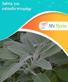 Salvia, Hydroponics, Diet Tips, Body Care, Herbalism, Detox, Plant Leaves, Health Fitness, Herbs
