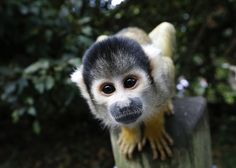 Check out the animals of the London Zoo checkup