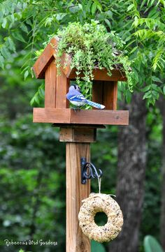 Rebecca's Bird Gardens: Products and Photos ♥ Living-roof Bird Feeder
