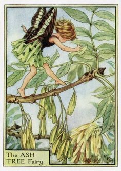 Ash Tree Flower Fairy Vintage Print c1950 Cicely by TheOldMapShop