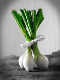 onions,  © Paul Randall Williams