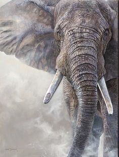 Kim Diment a multi-talented artist offering original paintings,prints,and sculptures of American & African wildlife Photo Elephant, Elephant Artwork, Elephant Love, Wildlife Paintings, Wildlife Art, Animal Paintings, Animal Drawings, Art Paintings, Elephant Photography