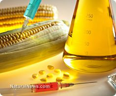 Food allergies have become a global epidemic and conventional medicine has no cure. In fact, according to the Centers for Disease Control, food allergies (in kids) have increased by 50% between 1997 and 2011. Could this have anything to do with genetically engineered foods? http://www.naturalnews.com/043290_allergies_cancer_GM_foods.html