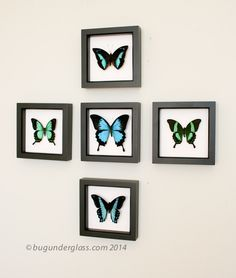 Photos Of Framed Insect Art And Their Environment