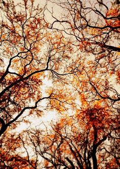 Nature Art Autumn Home Decor  Orange Rustic by Maddenphotography