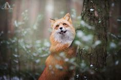 Enchanting Fox Photography Showcases Their Boundless Spirit