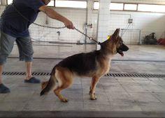 #mydog