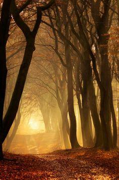 La llum del camí