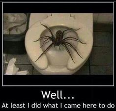 """""""I Think Every Australian Must Have A Huntsman Spider Story"""" Funny Shit, Haha Funny, Hilarious, Funny Stuff, Scary Stuff, Giant Huntsman Spider, Giant Spider, Huge Spiders, Scary Spiders"""