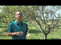 FUNGICIDES AND SPRAY GUIDE - YouTube