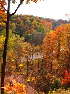 Fall trees - my favorite time of year! Just love the Fall and the beautiful picture God paints through nature! RB