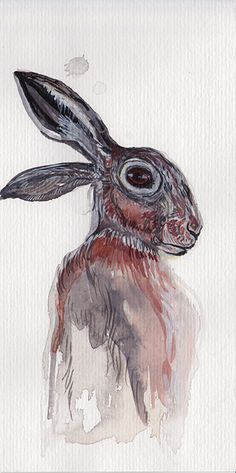 Hase, hare, watercolour