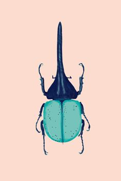 Insects - Illustration - Cercle Studio